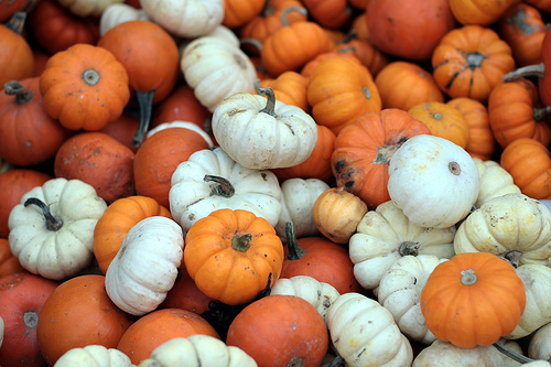 Everywere you go, they're avertising pumpkin somethin'. But what's the best?