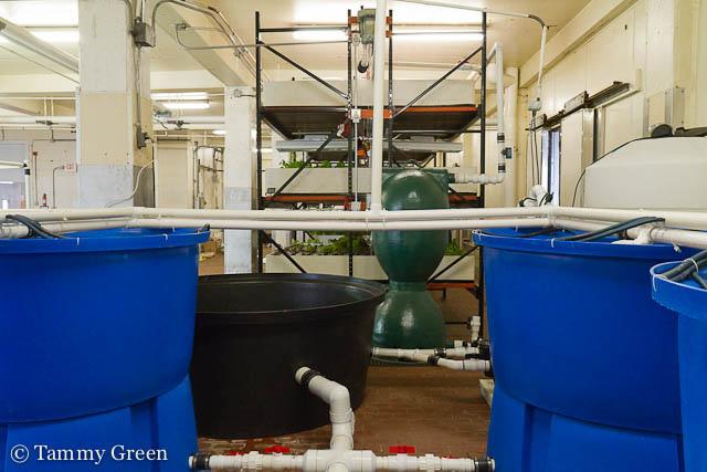 Aquaponics Set-up | 312 Aquaponics